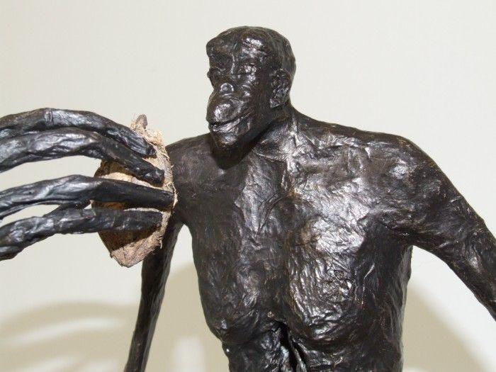 Bonobo en plein repas - Détail